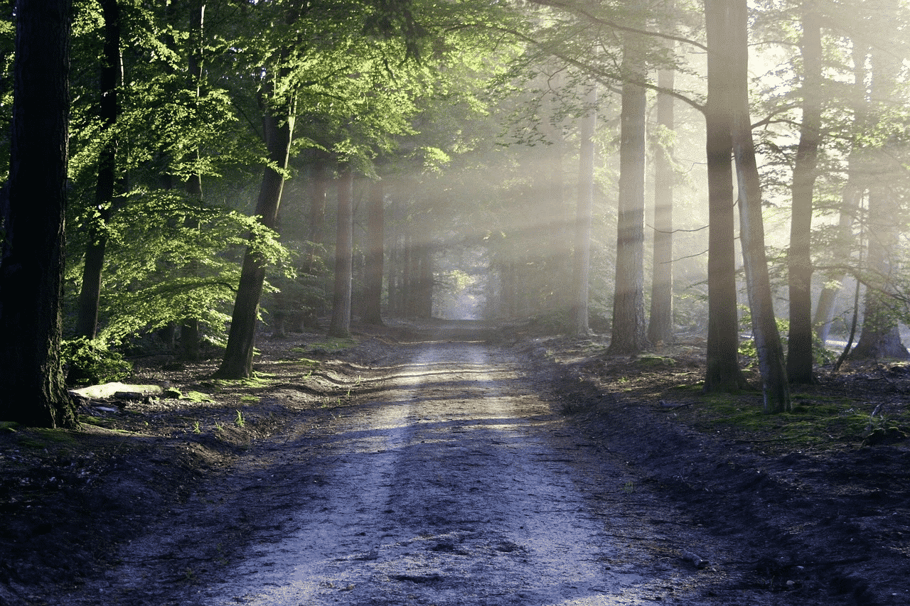 forest with trees and beam of light