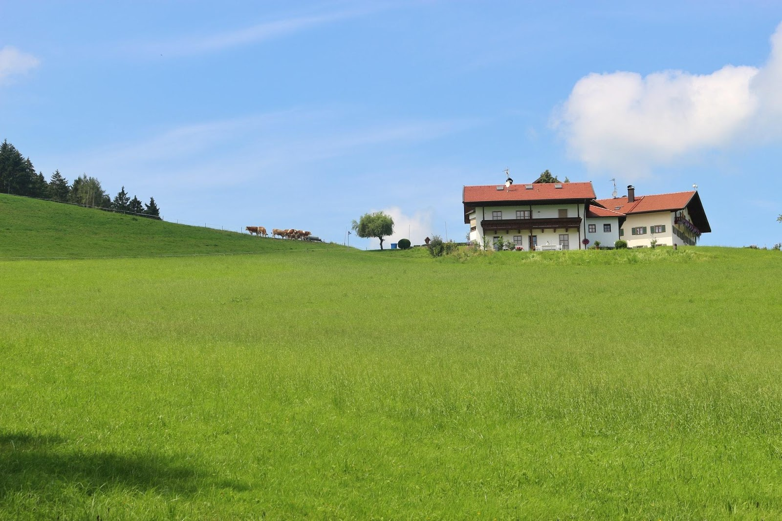 small houses on a field of grass